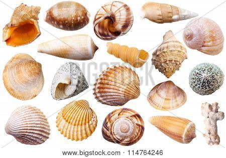 Set Of Different Mollusk Shells Isolated On White