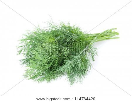 Fresh garden herbs. Dill. Isolated on white background