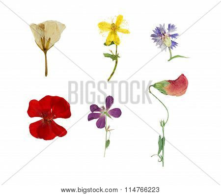 Pressed And Dried Six Flowers Isolated On White Background.
