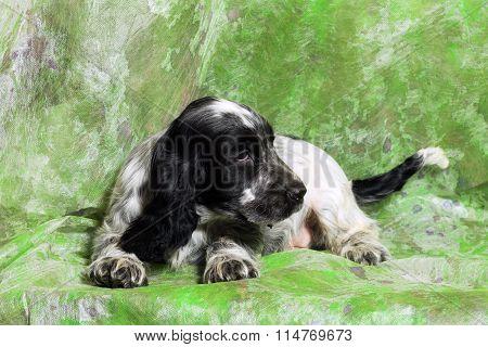Black And White English Cocker Spaniel Puppy