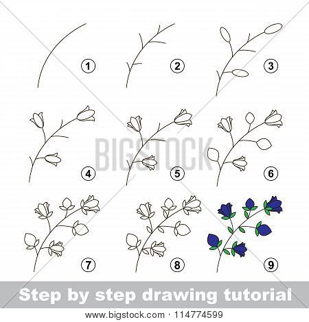 Drawing tutorial. How to draw a Bluebell