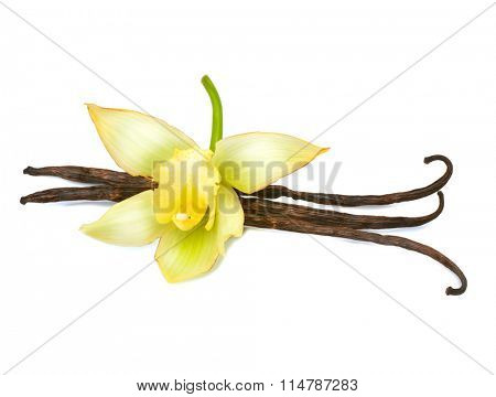 Vanilla. Vanilla pods and flower isolated on a white background