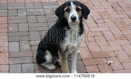 Very cute dog
