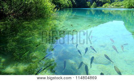 Fish at Plitvice Lakes