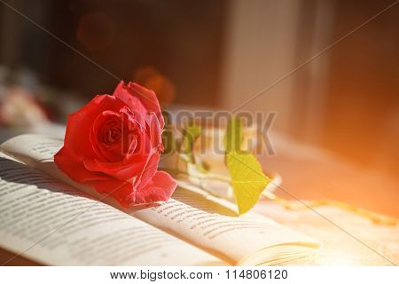 Pink Rose And Book  On Table In Sunlight, Soft Focus. Valentines Day Background