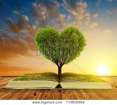 Book with a tree in the shape of heart at sunset. Valentines day.