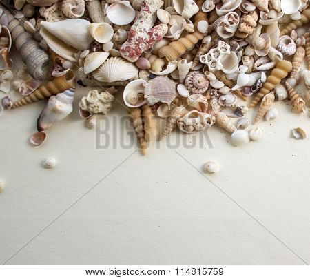 sea composition with shells