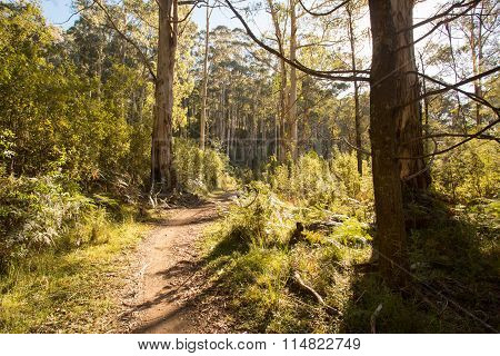 Delatite River Trail at Mt Buller