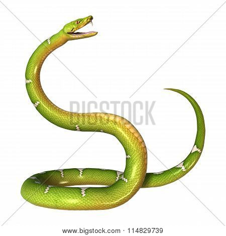 Green Tree Python On White
