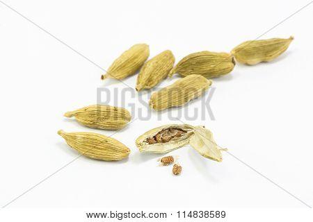 Fragrant Cardamom Spice