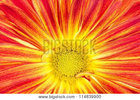 Yellow and orange rover flower