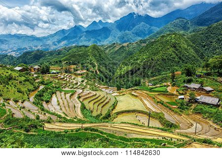 Rice field terraces (rice paddy fields). Near Cat Cat village - popular tourist trekking destination. Near Sapa, Vietnam