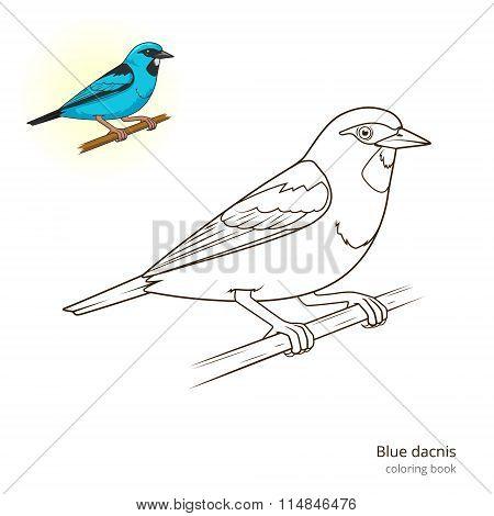 Blue dacnis bird educational game vector