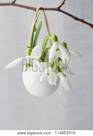 Bunch of snowdrops in egg shell on white wooden board. Shallow depth of field, focus on near flowers. Easter concept