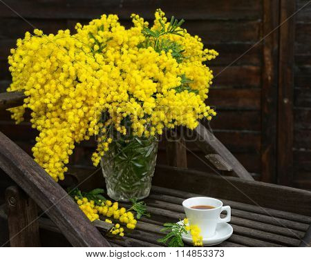 Still life with mimosa's yellow spring flowers on the background of old brown wall