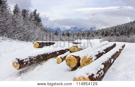 Mountain Vale With Logs