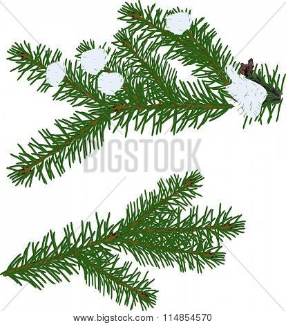 illustration with green fir branches isolated on white background