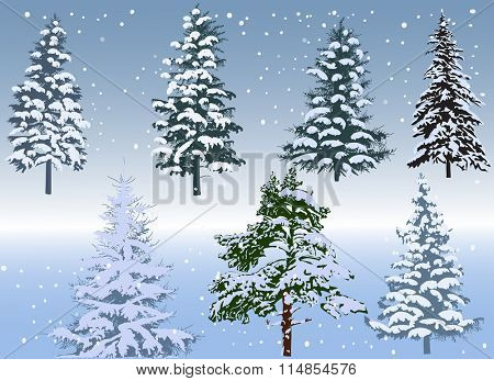 illustration with seven winter firs on blue background