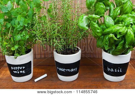 Potted Herbs With Labels