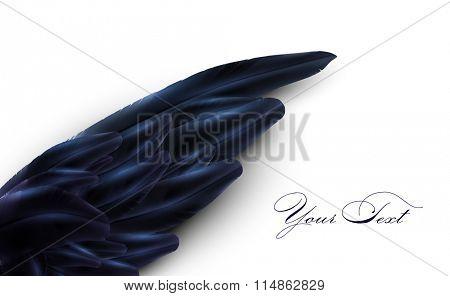 vector bird wing illustration