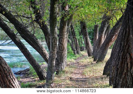 Trees By The River