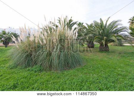 Fresh Green Palm Trees