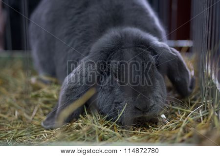 Big Gray Rabbit In The Cage