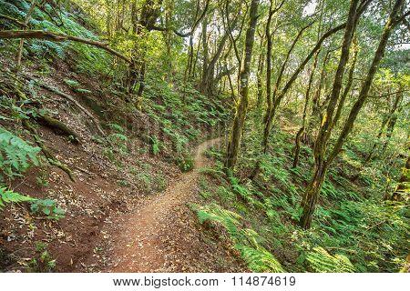 Rain forest in Garajonay national park La Gomera Canary islands Spain.