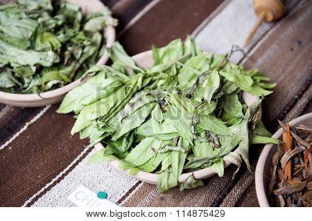 Chilca dye plant