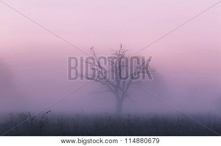 Foggy Spring Sunrise