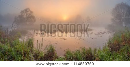 Mist On The Swamp