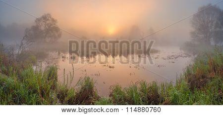 Mist On The Swamp