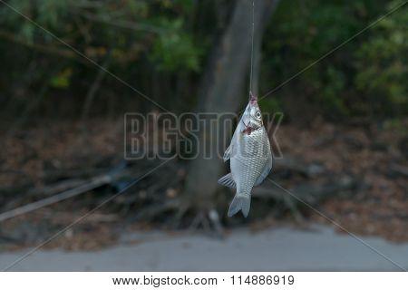 Process Of Fishing