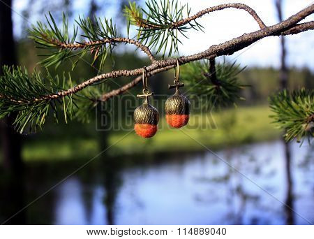 Acorns on branch