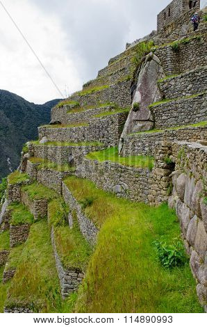 Steep terraces at the back side of the ancient Inca city Machu Picchu Peru