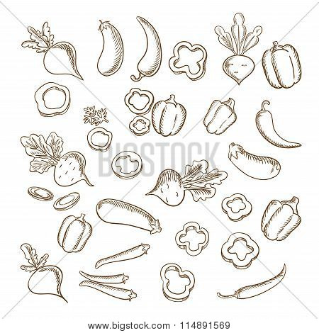 Sketch of fresh farm vegetarian vegetables