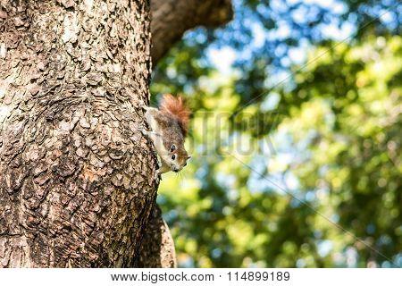 Squirrel Clinging
