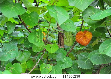 Yellow leaves among green foliage