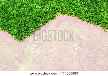 Paving and lawn for background and texture