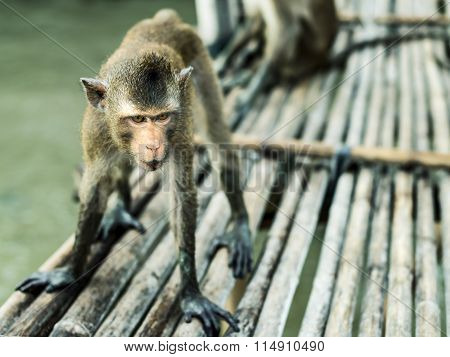 Awesome Sight.  Focus On The Eyes Of The Monkey