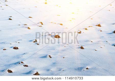 Arable Land Under Snow