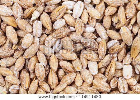 Raw Pearl Barley Close Up