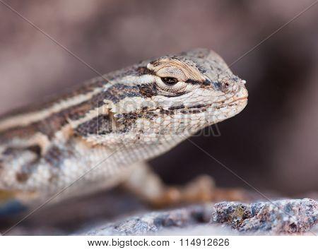 Happy Lizard Day