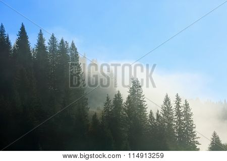 Coniferous Forest In Fog And Morning Sunlight