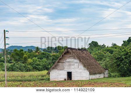 Tobacco House in Pinar del Rio,Cuba