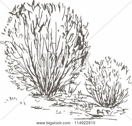 willow bushes with leaves and grass