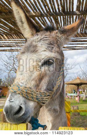 Donkey close up portrait at a park.