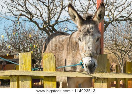 Cute donkey portrait at a park.