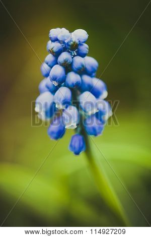 purple flower, which consists of many small bells
