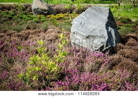 Decorative Flower Bed In A Garden With Rocks And Plants
